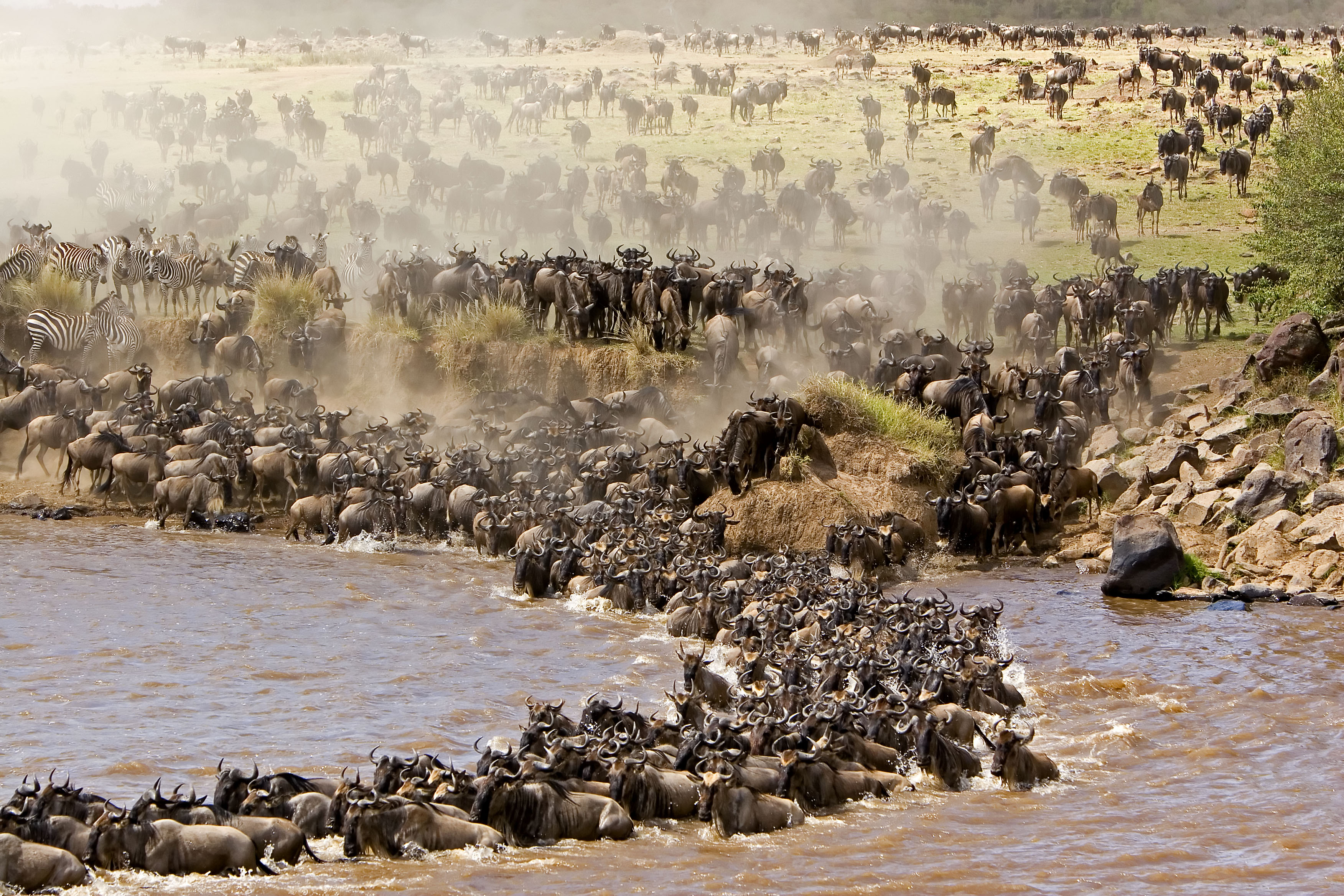 wildebeest-migration-kenya