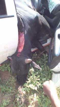 Gory Accident