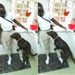 chimano ken 250x250 - 'Unfollow us!' Sauti Sol Bien defends Chimano after 'dirty' dance with dog