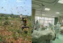 locusts and coronavirus